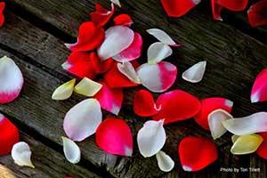 tori file petals